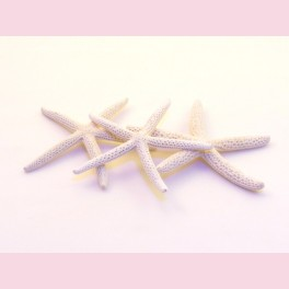 Etoile de mer blanche