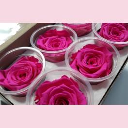 Rose éternelle rose lot de 6