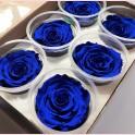 Rose éternelle bleu foncé par 6