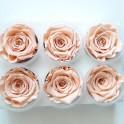 Rose éternelle Pêche lot de 6